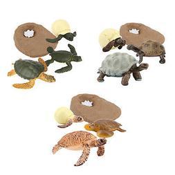 Turtle Life Cycle Figure Early Education Learning Imaginatio